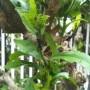 Yaprak Bitlerine Karşı Ekolojik İlaç