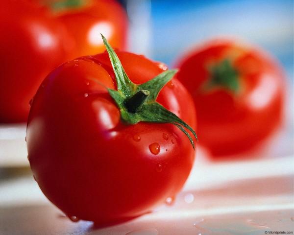 tomatoessd71